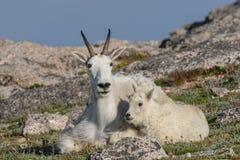 Няня козы горы и ее милый ребенк стоковая фотография