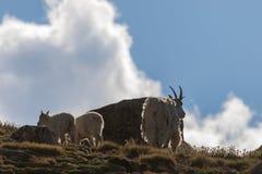 Няня козы горы и милые дети стоковая фотография