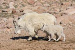 Няня козы горы и милый ребенк Стоковая Фотография RF