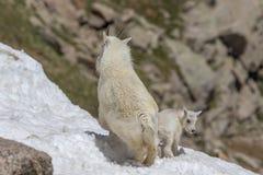 Няня козы горы и милый ребенк стоковые фото