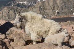Няня козы горы с ребенк Стоковая Фотография