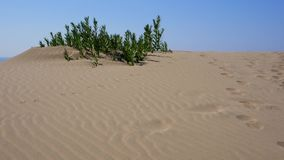 Оазис в пустыне сток-видео