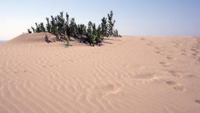 Оазис в пустыне акции видеоматериалы