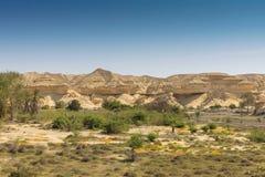 Оазис в пустыне Namibe anisette Стоковая Фотография RF
