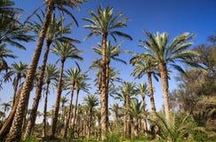 Оазис в середине пустыни Стоковые Фото