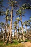 Оазис в середине пустыни Стоковое Фото