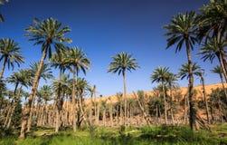 Оазис в середине пустыни Стоковые Изображения RF