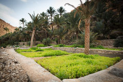 Оазис в середине пустыни Стоковая Фотография RF