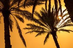 Оазис в середине пустыни Стоковые Изображения