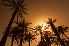 Оазис в середине пустыни Стоковые Фотографии RF