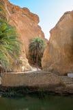 Оазис в ущелье утеса с прудом Стоковая Фотография RF