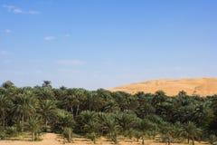 оазис дюн стоковое фото