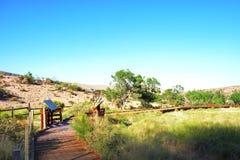 Оазис между красным каньоном утеса Стоковые Изображения