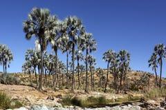 оазис Намибии damaraland Стоковое фото RF