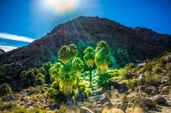 Оазис надежды - национальный парк дерева Иешуа - Калифорния Стоковые Фотографии RF