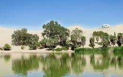 Оазис пальм зеленый около озера Стоковое фото RF
