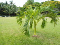 Оазис пальм, пальмы в саде, красивая ладонь выходит Стоковая Фотография RF