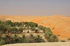Оазис пустыни Стоковое Изображение RF