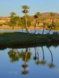 Оазис пустыни Стоковая Фотография RF