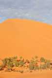 оазис Сахара пустыни Стоковые Фотографии RF