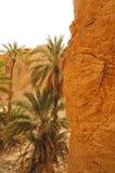 Оазис Chebika в Тунисе Стоковая Фотография RF