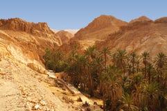 Оазис Chebika в Тунисе Стоковое Изображение RF