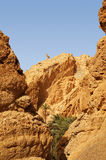 Оазис Chebika в Тунисе Стоковое Изображение