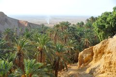 Оазис Chebika Туниса Стоковая Фотография RF
