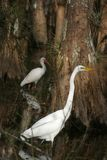 обед wading Стоковые Изображения RF