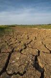 Обезвоженная земля на рисовых полях Стоковая Фотография RF
