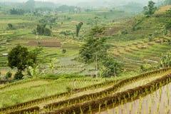 Обезвоженные земли вокруг plateu Dieng, Ява, Индонезии Стоковая Фотография