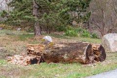 Обезлесение - защищенная зона ландшафта стоковые фото