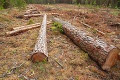 Обезлесение и промышленный вносить в журнал дерева стоковые изображения rf