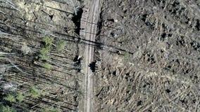 Обезлесение леса после урагана, вида с воздуха трутня видеоматериал