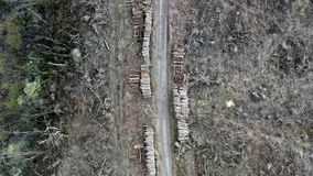 Обезлесение, разрушенный лес после урагана, вида с воздуха сток-видео