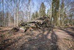 Обезлесение, убийство леса Стоковые Фотографии RF