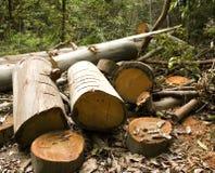 обезлесение Стоковые Изображения RF