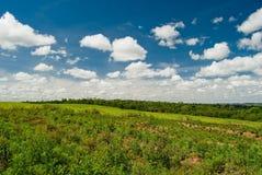 обезлесение Стоковые Фото