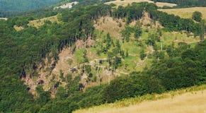 обезлесение стоковое фото rf