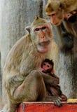 Обезьяна в Таиланде Стоковое Фото