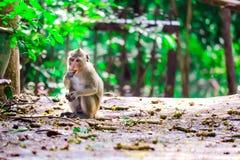 Обезьяна джунглей ест шнурок и плод падая на пол стоковое фото rf