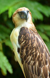 Обезьяна есть орла стоковая фотография