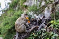 Обезьяна есть свежие фрукты на открытом воздухе Животное Таиланда стоковое изображение