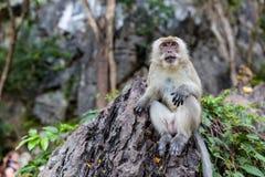 Обезьяна есть свежие фрукты на открытом воздухе Животное Таиланда стоковые изображения rf