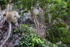 Обезьяна есть свежие фрукты на открытом воздухе Животное Таиланда стоковое изображение rf