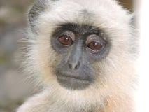 обезьяна заботливая Стоковое Изображение RF