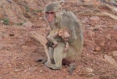 обезьяна и обезьяна младенца вытаращить на туристах Стоковое Изображение RF