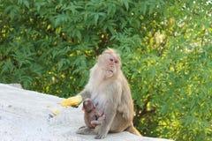 Обезьяна и свой ребенок Стоковое Изображение RF