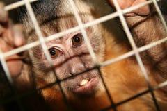 обезьяна клетки Стоковая Фотография