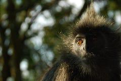 обезьяна короля Стоковые Изображения RF